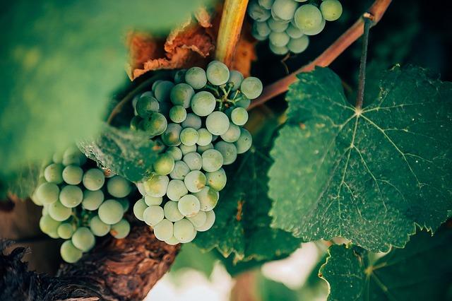 Wijnreis naar Frankrijk