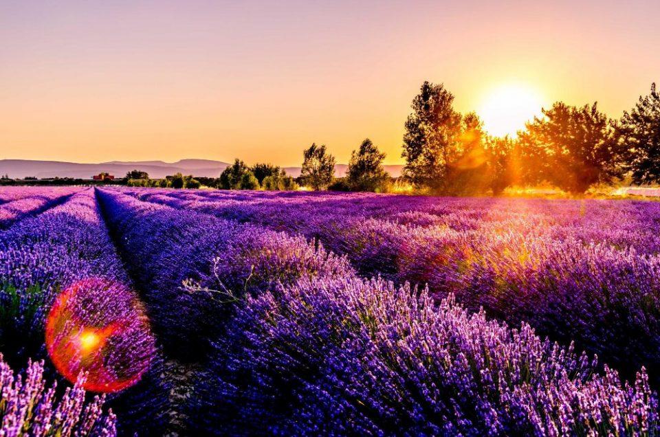 8 Redenen waarom jouw volgende trip naar de Provence moet zijn